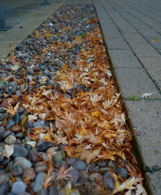 Fallen leaves on gravel